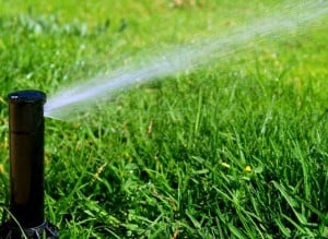Save your lawn with proper watering