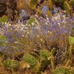 Cactus and purple desert wildflower