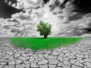 austin irrigation drought