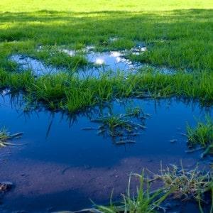 very wet grass