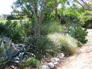 Xeriscaping in Texas